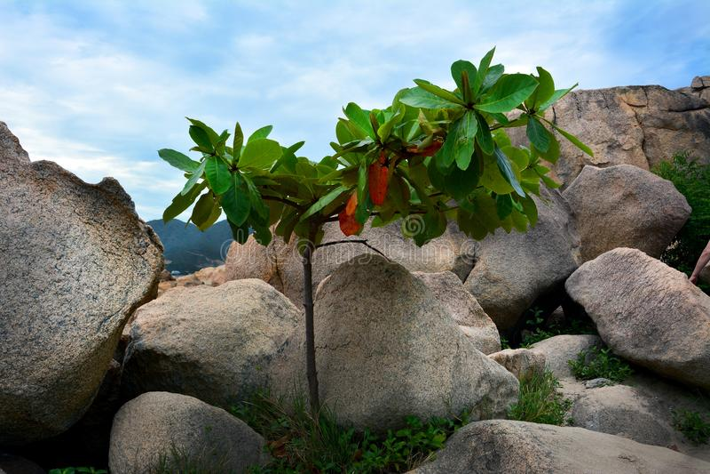 Ένας νεαρός βλαστός της ζωής μεταξύ των πετρών στοκ φωτογραφία με δικαίωμα ελεύθερης χρήσης