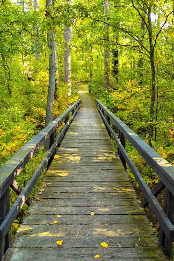 Ένας ξύλινος θαλάσσιος περίπατος συγχωνεύει σε ένα πολύβλαστο πράσινο δάσος στα βόρεια ξύλα στοκ φωτογραφίες