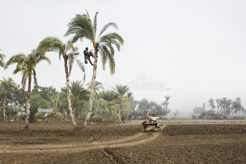 Ένας ορειβάτης δέντρων στοκ φωτογραφίες