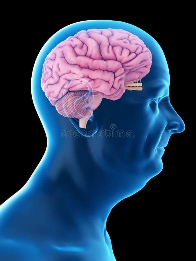 Ένας παλαιός επανδρώνει τον εγκέφαλο απεικόνιση αποθεμάτων