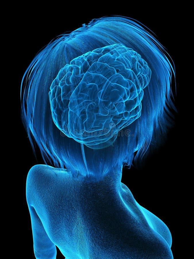 Ένας παλαιότερος εγκέφαλος θηλυκών απεικόνιση αποθεμάτων