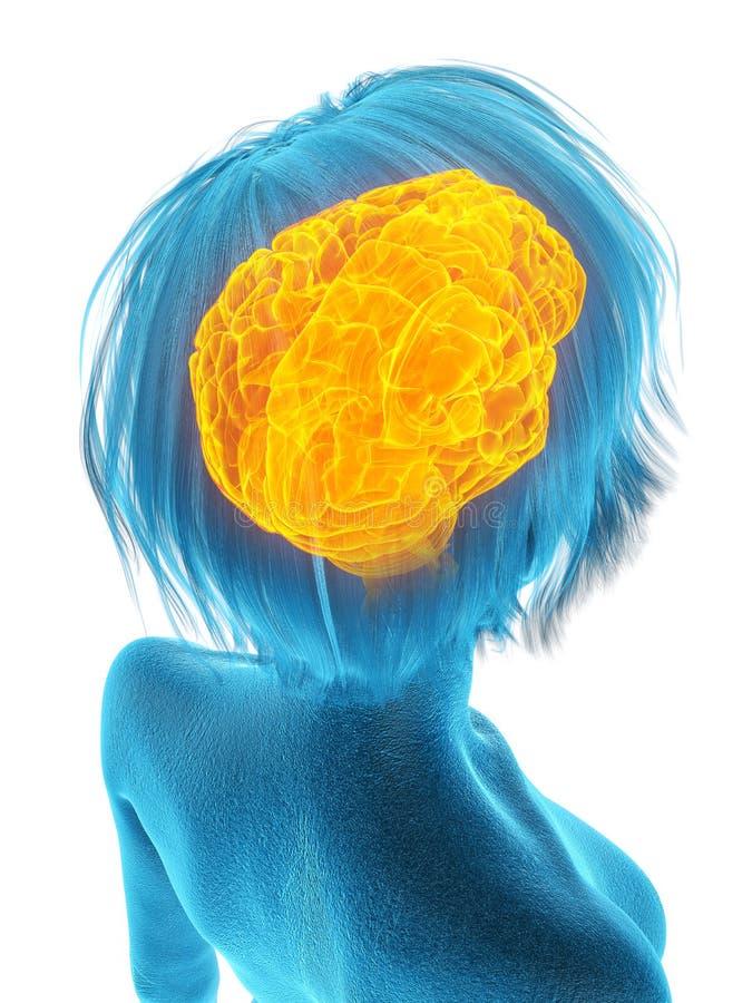 Ένας παλαιότερος εγκέφαλος θηλυκών διανυσματική απεικόνιση