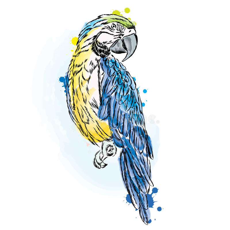 Ένας παπαγάλος επίσης corel σύρετε το διάνυσμα απεικόνισης διανυσματική απεικόνιση