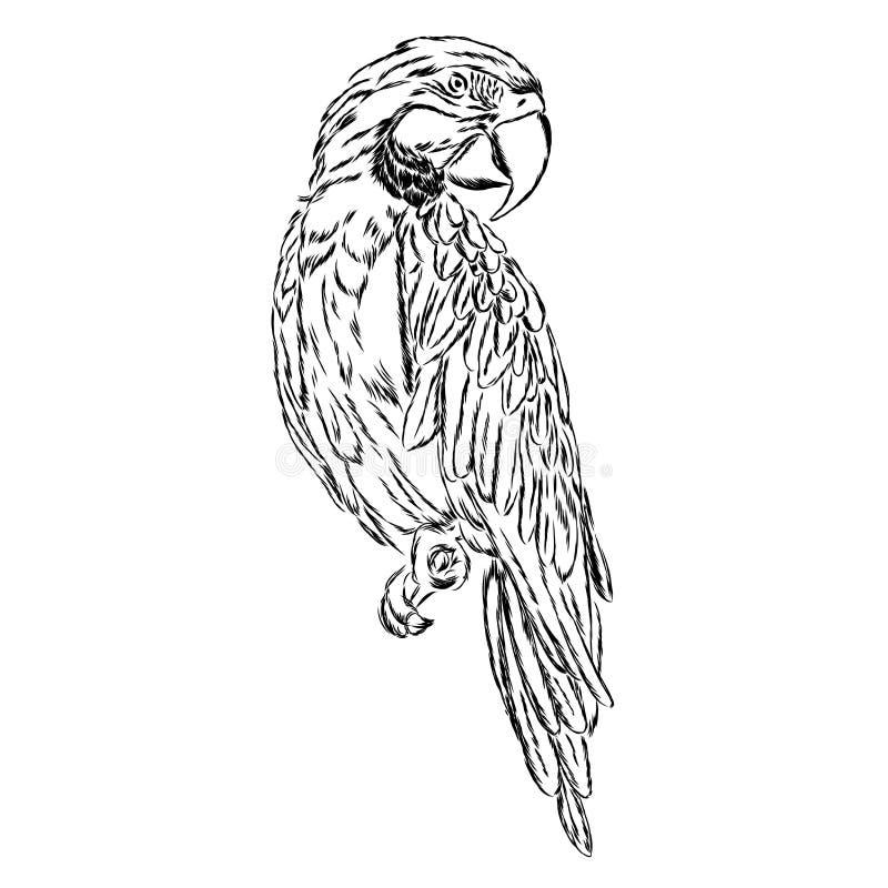 Ένας παπαγάλος επίσης corel σύρετε το διάνυσμα απεικόνισης ελεύθερη απεικόνιση δικαιώματος