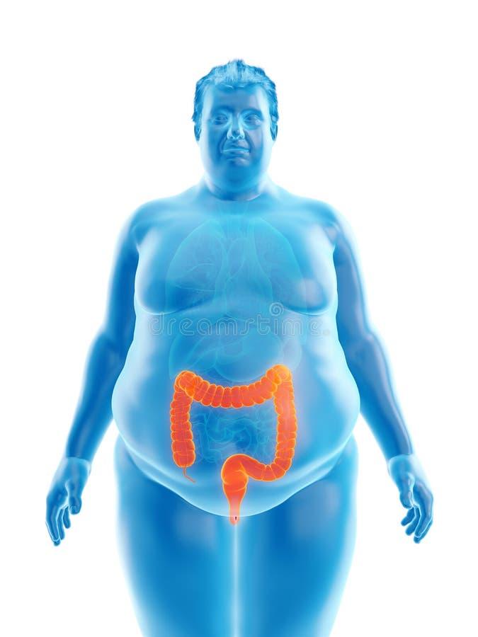 Ένας παχύσαρκος επανδρώνει την άνω και κάτω τελεία διανυσματική απεικόνιση