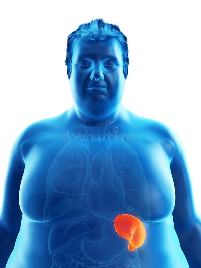 Ένας παχύσαρκος επανδρώνει τη σπλήνα ελεύθερη απεικόνιση δικαιώματος