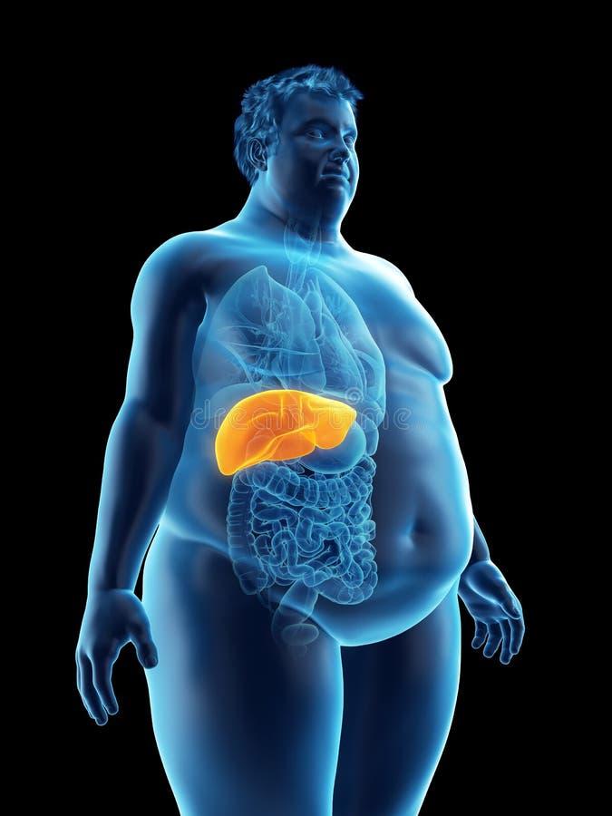 ένας παχύσαρκος επανδρώνει το συκώτι ελεύθερη απεικόνιση δικαιώματος