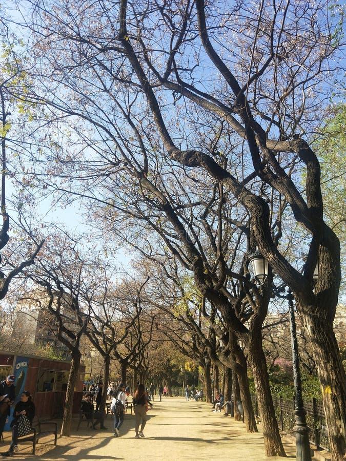 Ένας περίπατος που θυμάται, πάρκο κάπου στη Βαρκελώνη Ισπανία στοκ φωτογραφία με δικαίωμα ελεύθερης χρήσης