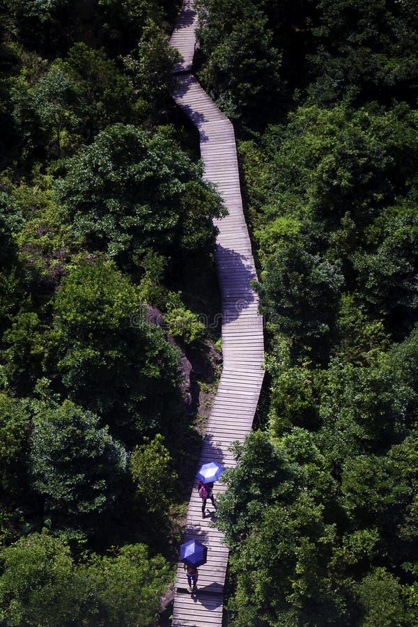 Ένας περίπατος στα δέντρα στοκ φωτογραφία