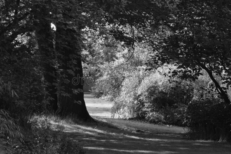 Ένας περίπατος στο σκοτάδι στοκ εικόνα με δικαίωμα ελεύθερης χρήσης