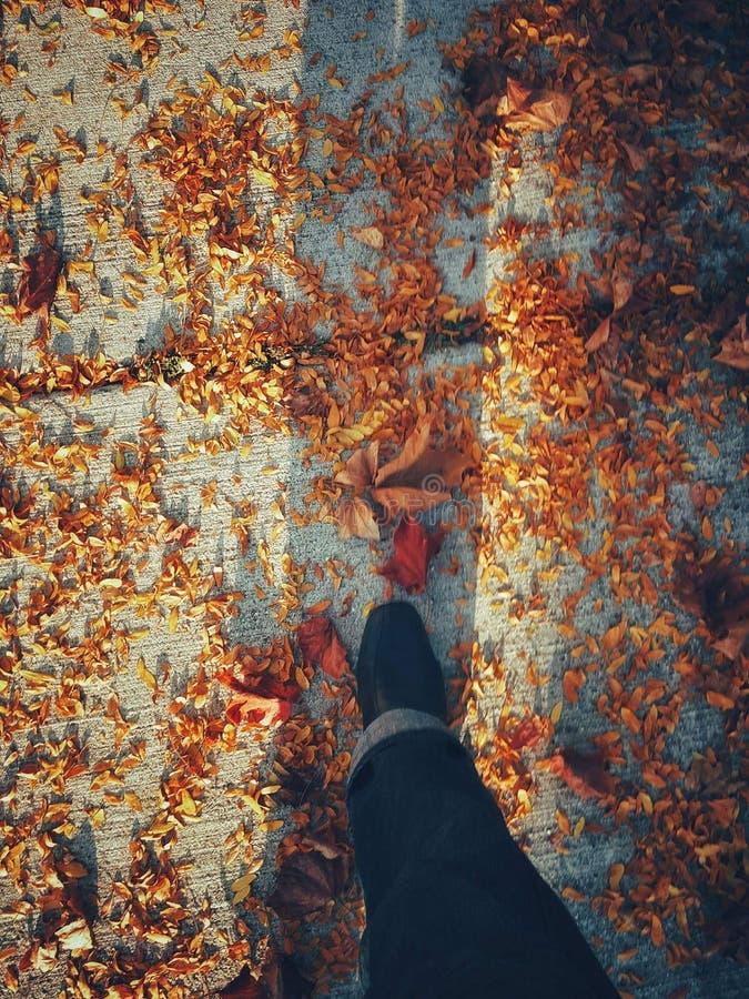 Ένας περίπατος το φθινόπωρο στοκ φωτογραφία
