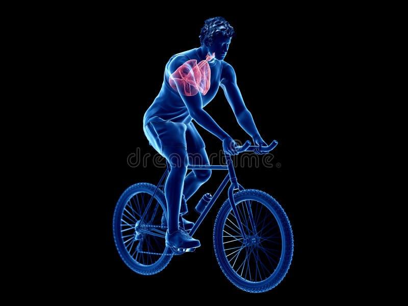 ένας πνεύμονας ποδηλατών ελεύθερη απεικόνιση δικαιώματος