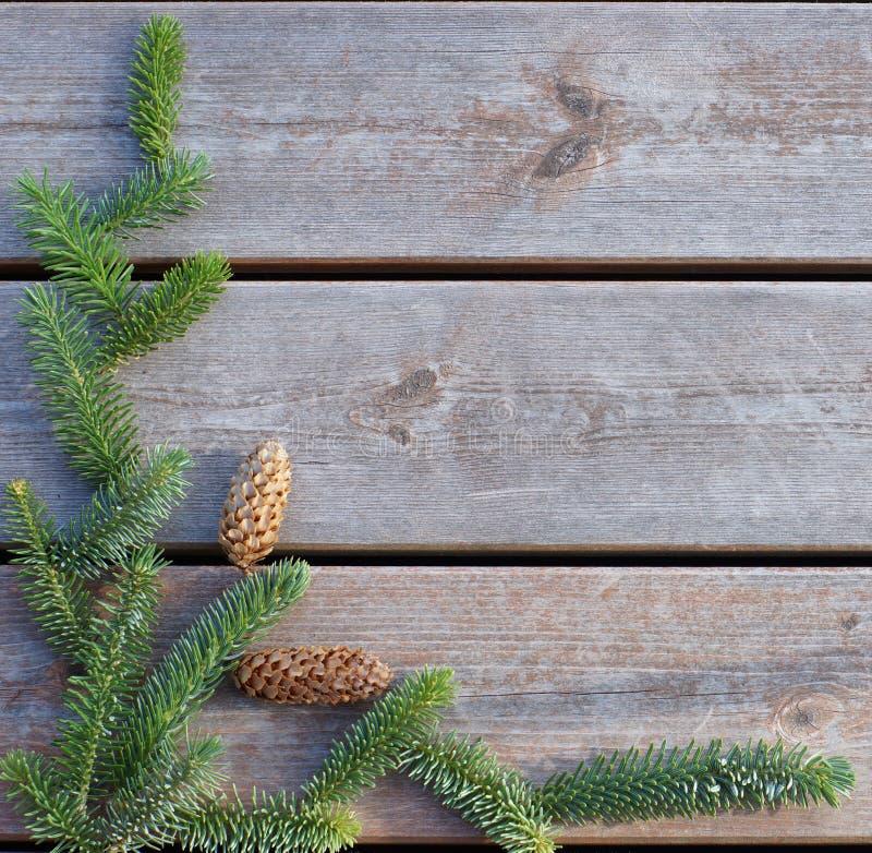 Ένας πράσινος κομψός κλάδος βρίσκεται σε ένα ξύλινο υπόβαθρο στοκ εικόνες