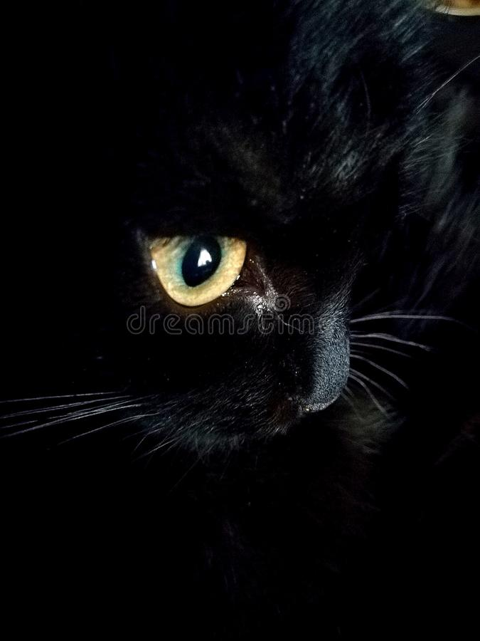 Ένας προσεκτικός παρατηρητής η γάτα στοκ εικόνα