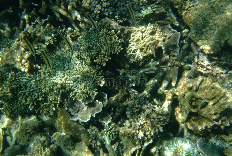 Ένας ρηχός βυθός των κοραλλιογενών υφάλων και των ωκεάνιων εγκαταστάσεων στοκ φωτογραφία με δικαίωμα ελεύθερης χρήσης
