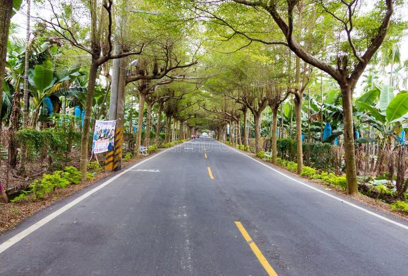 Ένας δρόμος που περιβάλλεται με το δέντρο στοκ φωτογραφία με δικαίωμα ελεύθερης χρήσης