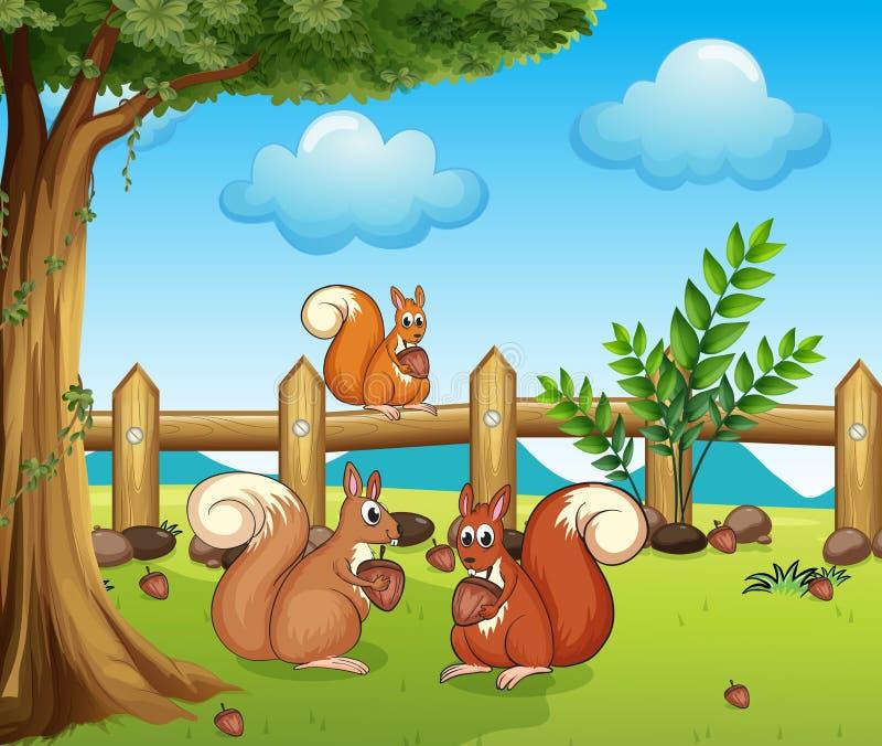 Ένας σκίουρος που τρώει το καρύδι διανυσματική απεικόνιση