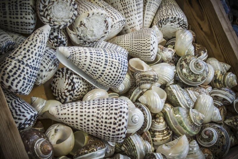 Ένας σωρός των θαλασσινών κοχυλιών στοκ φωτογραφία