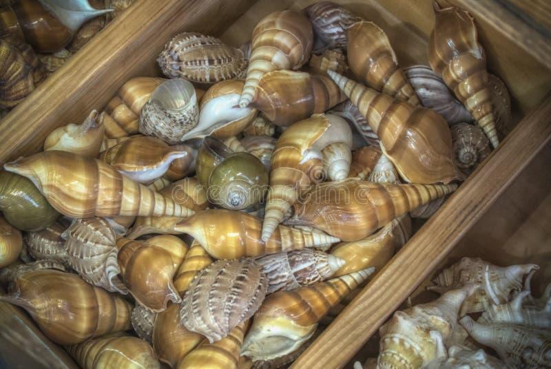 Ένας σωρός των θαλασσινών κοχυλιών στοκ φωτογραφία με δικαίωμα ελεύθερης χρήσης