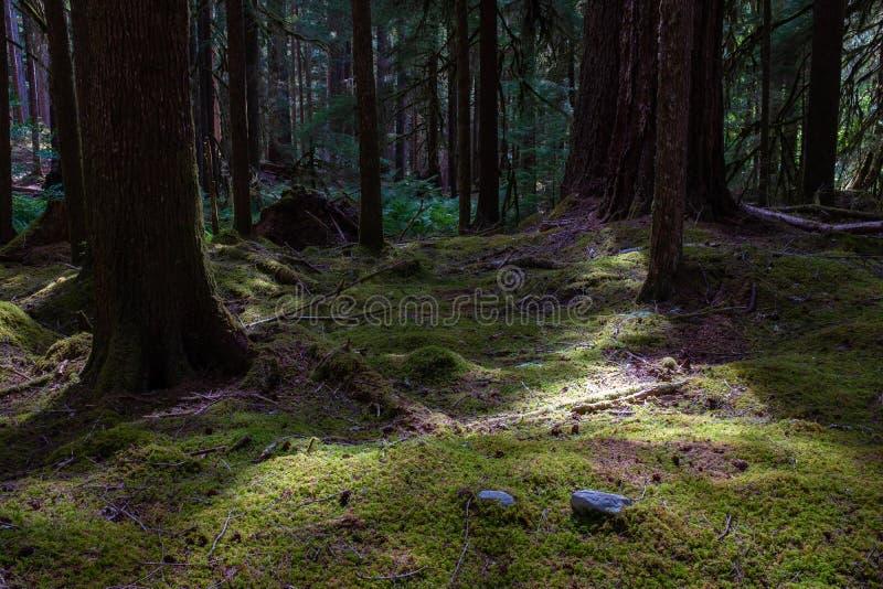 Ένας τάπητας του πράσινου βρύου οδηγεί μακριά στο δάσος στο ίχνος Duc κο στοκ εικόνες με δικαίωμα ελεύθερης χρήσης