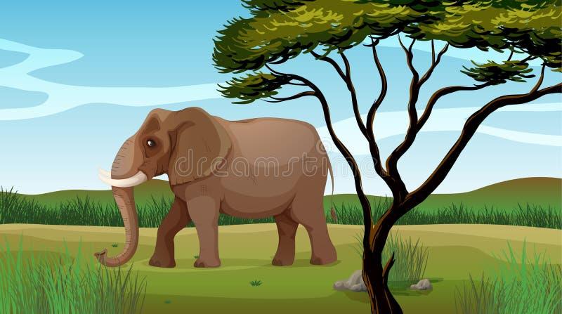 Ένας τεράστιος ελέφαντας απεικόνιση αποθεμάτων