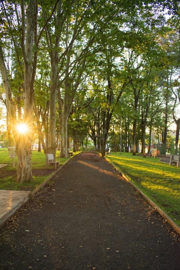 Ένας τρόπος στο φυσικό πάρκο σε μια πόλη στοκ εικόνες
