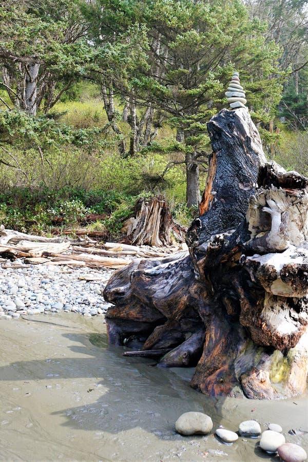 Ένας τύμβος σημαδιών θάλασσας χτίζεται επάνω σε ένα ογκώδες ειρηνικό κολόβωμα δέντρων στοκ φωτογραφία με δικαίωμα ελεύθερης χρήσης
