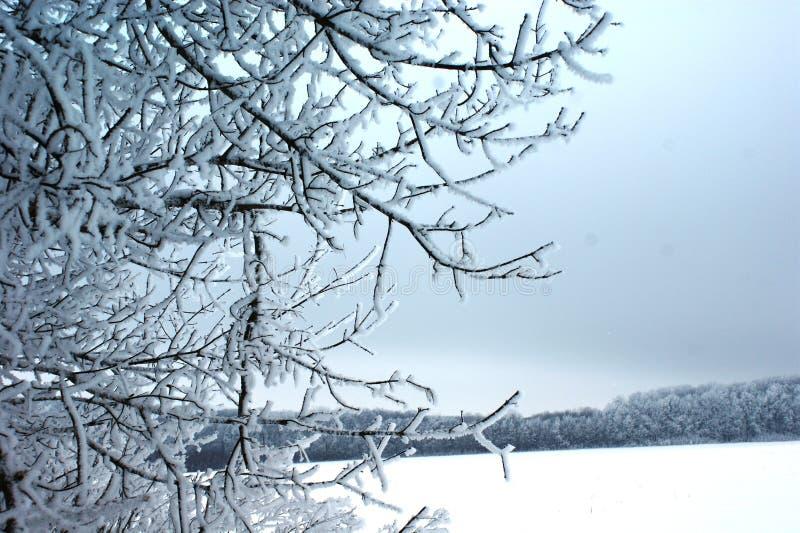 Ένας χειμώνας έχει τους μοντέρνους και σταματημένους συνδυασμούς χρωμάτων στοκ εικόνα