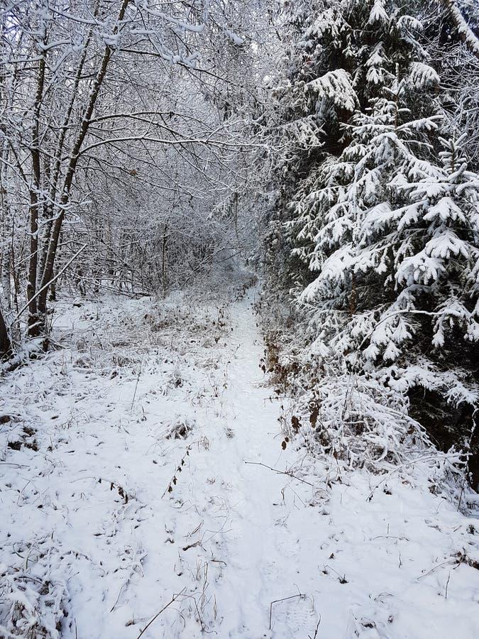 Ένας χιονώδης περίπατος στοκ εικόνα με δικαίωμα ελεύθερης χρήσης