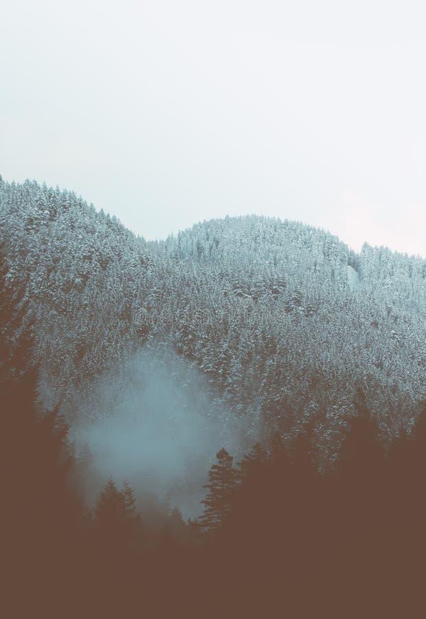 Ένας όμορφος εναέριος πυροβολισμός ενός δάσους στοκ εικόνα