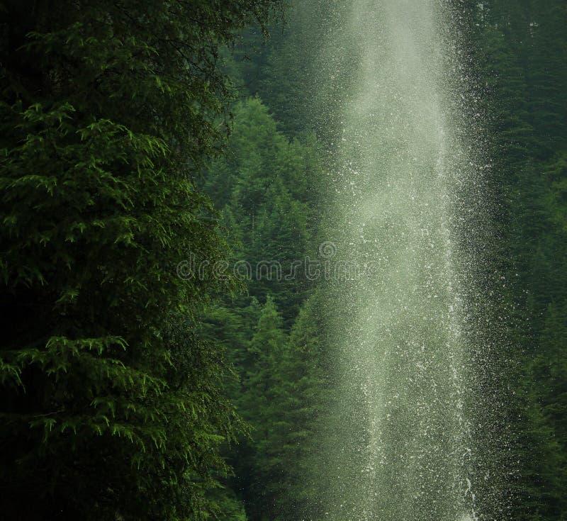 Ένας όπου κανόνες φύσης στοκ εικόνα