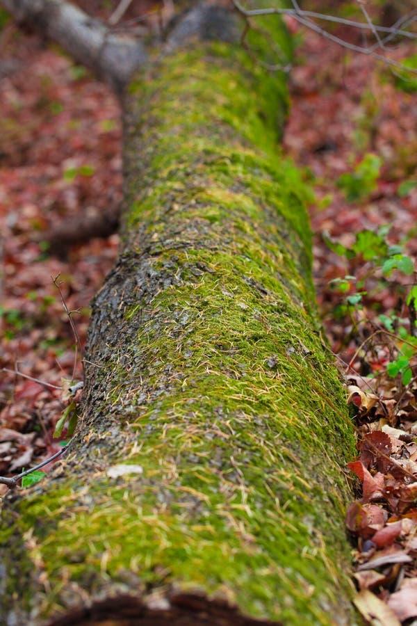Ένας mossy κορμός στο έδαφος στοκ φωτογραφίες