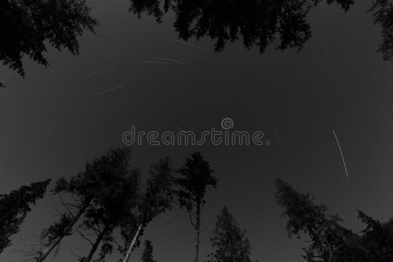 Έναστρη νύχτα στο δάσος στοκ φωτογραφία με δικαίωμα ελεύθερης χρήσης