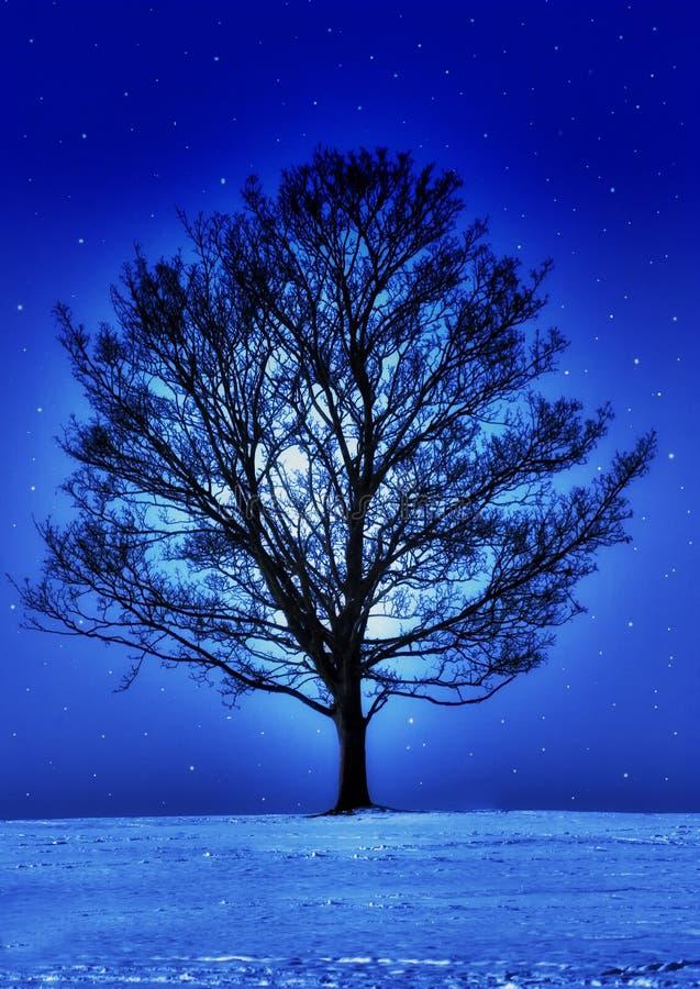 Έναστρη νύχτα στοκ εικόνες με δικαίωμα ελεύθερης χρήσης