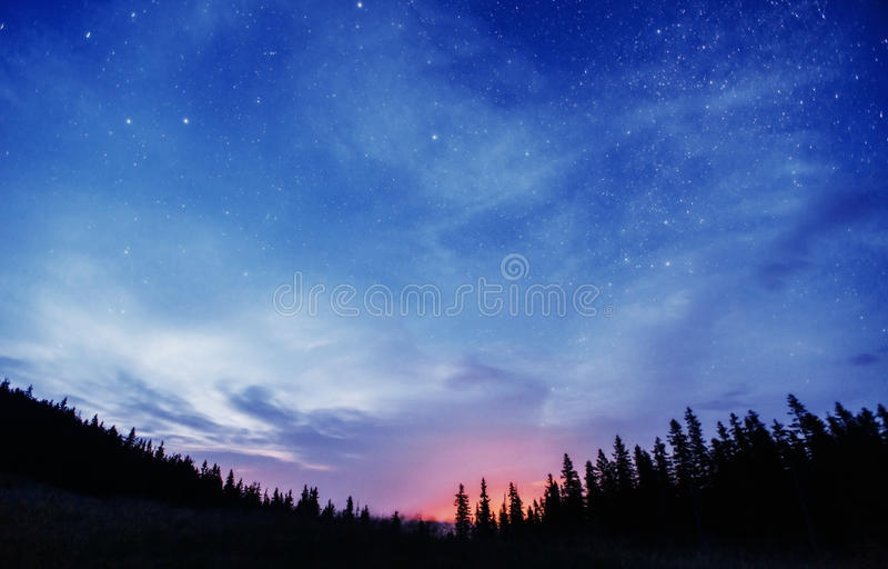Έναστρος ουρανός μέσω των δέντρων στοκ φωτογραφίες