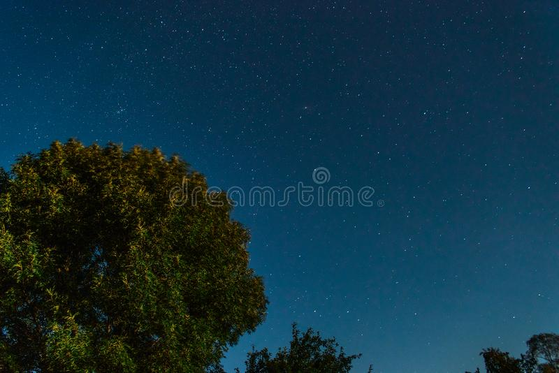 Έναστρος ουρανός με έναν ιώδη θάμνο στοκ εικόνες με δικαίωμα ελεύθερης χρήσης