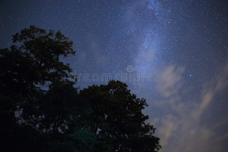 Έναστρος ουρανός πέρα από το δάσος στοκ φωτογραφίες με δικαίωμα ελεύθερης χρήσης