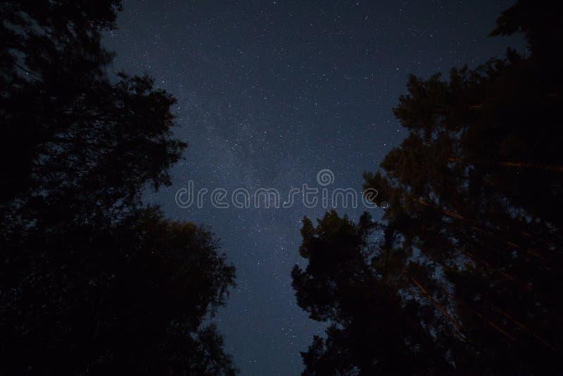 Έναστρος ουρανός στο δάσος στοκ φωτογραφία με δικαίωμα ελεύθερης χρήσης
