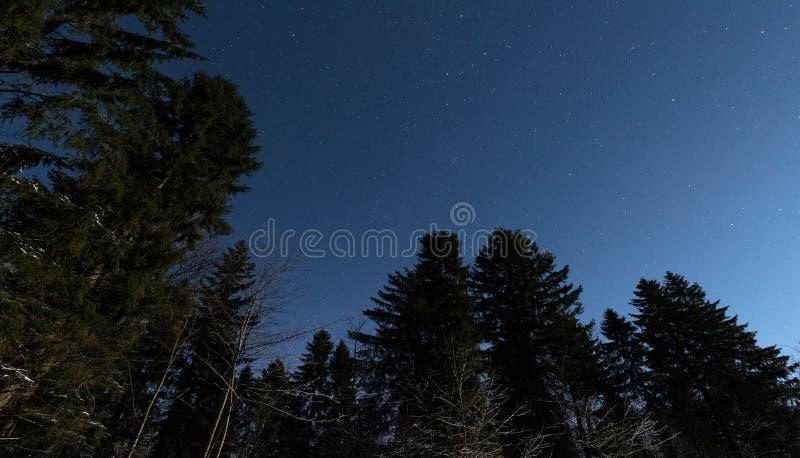 Έναστρος ουρανός στο χειμερινό δάσος στοκ φωτογραφία με δικαίωμα ελεύθερης χρήσης