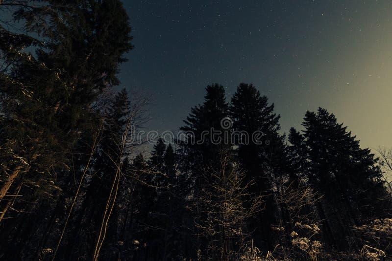 Έναστρος ουρανός στο χειμερινό δάσος στοκ φωτογραφίες