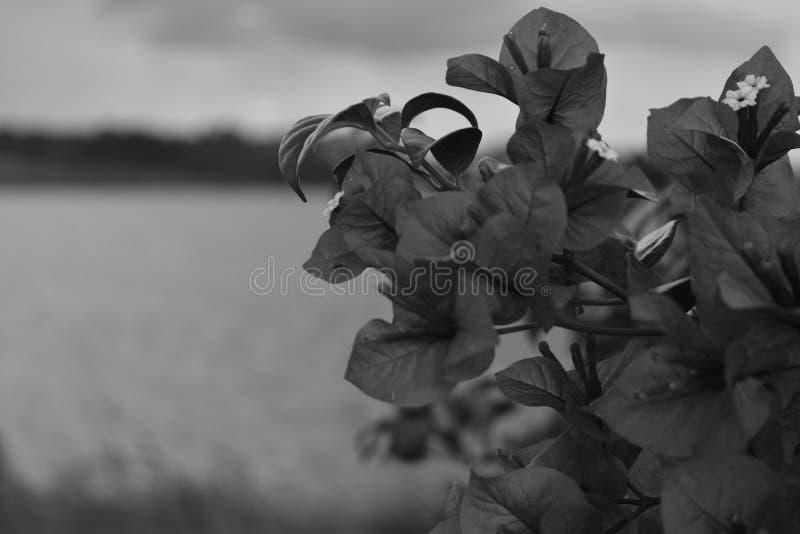 Ένα άγριο γενναίο λουλούδι στοκ εικόνα με δικαίωμα ελεύθερης χρήσης