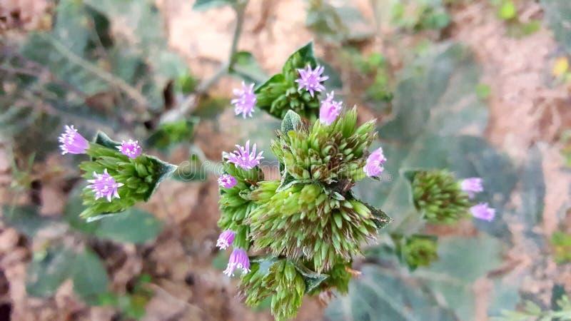 Ένα άλλο όμορφο άγριο λουλούδι στοκ φωτογραφίες με δικαίωμα ελεύθερης χρήσης