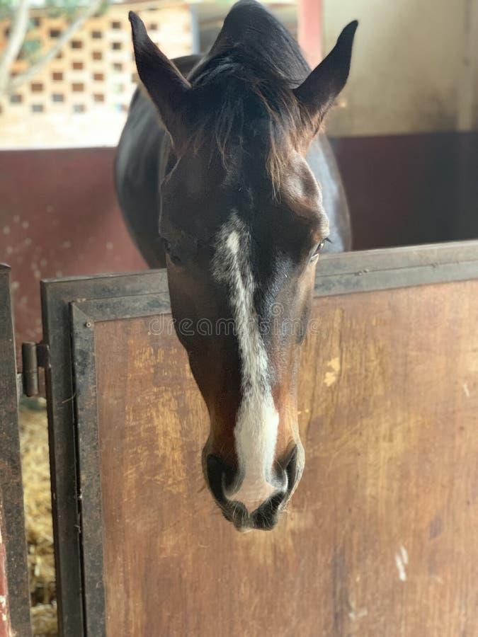 Ένα άλογο με τα όμορφα μάτια που στέκονται στο σταύλο r στοκ φωτογραφία
