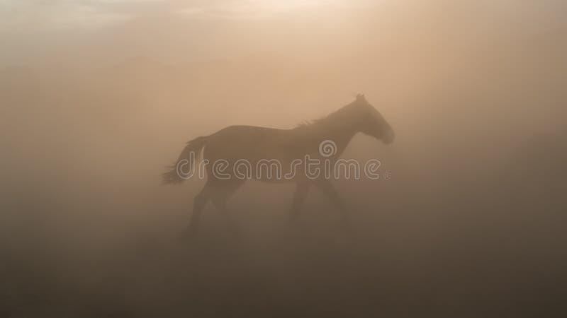 Ένα άλογο που τρέχει και κλωτσάει σκόνη Τα άλογα της Γιλκίς στην Καϊσερί Τουρκία είναι άγρια άλογα χωρίς ιδιοκτήτες στοκ φωτογραφία