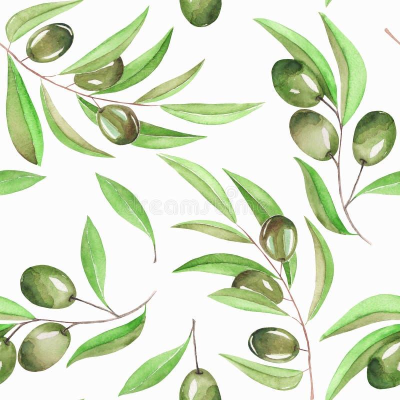Ένα άνευ ραφής σχέδιο με τους κλάδους watercolor των πράσινων ελιών σε ένα άσπρο υπόβαθρο διανυσματική απεικόνιση