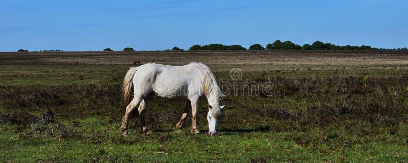 Ένα άσπρο άλογο και ο μπλε ουρανός στοκ εικόνες με δικαίωμα ελεύθερης χρήσης