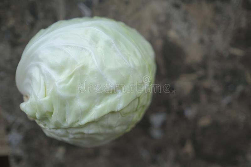 Ένα άσπρο λάχανο σε έναν πίνακα στοκ εικόνες
