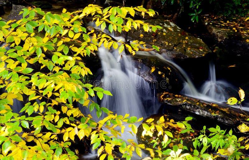 Ένα άσπρο ρεύμα νερού ορμά κατευθείαν ένα μεταβαλλόμενο τοπίο το πρόωρο φθινόπωρο στοκ φωτογραφία