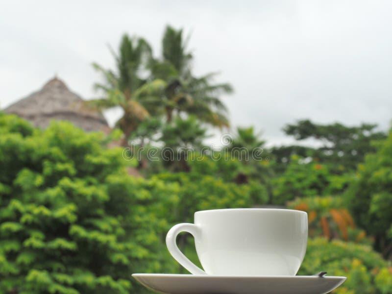 Ένα άσπρο φλιτζάνι του καφέ με τα δέντρα backgroud στοκ εικόνα με δικαίωμα ελεύθερης χρήσης