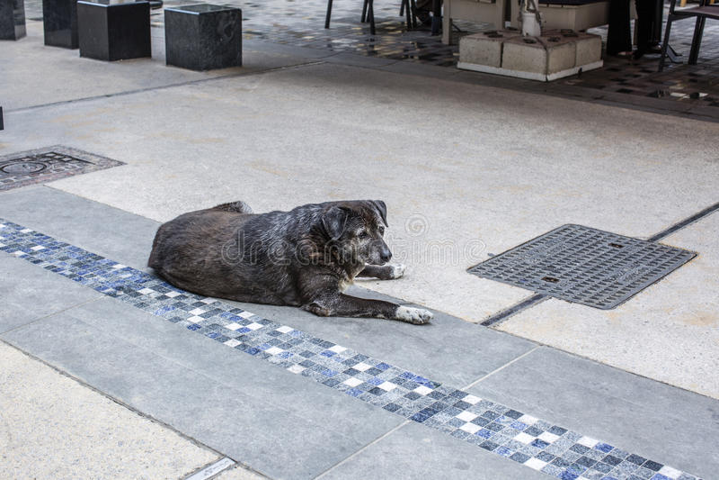 Ένα άστεγο λυπημένο γκρίζο αντιμέτωπο σκυλί βρίσκεται στην οδό Θεσσαλονίκης στοκ εικόνες